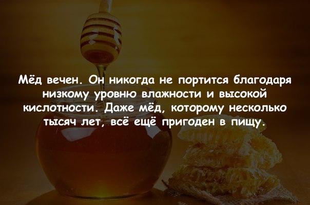 чему снится мёд никогда не портится аренда квартир Сергиевом