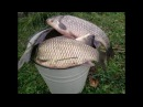 Супер рыболовная насадка ПРИЛИПАЛА Карась карп теперь не проблема