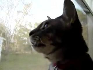 Кот матюкается=))))))))))))