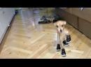 Смешные животные Funny Dogs Cats Compilation 2017 犬 Смешные собаки и умные кошки Приколы про собак