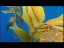 BBC Голубая планета 3 Открытый океан Познавательный природа животные 2001