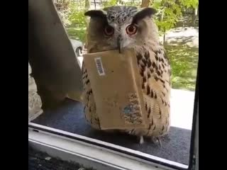 When your letter to Hogwarts finally comes! .