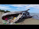 Whale found dead after swallowing 40kg of plastic in Philippines