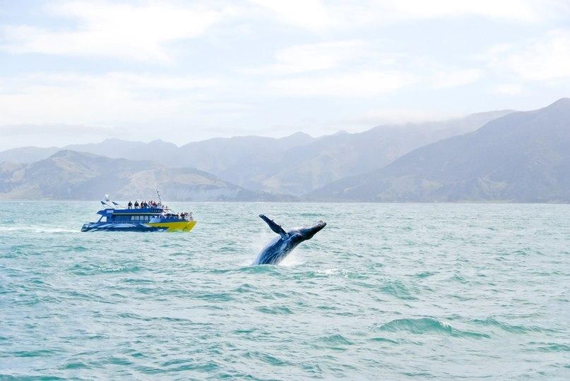 Горбатые киты в Доминикане: Где и когда можно увидеть горбачей в океане, изображение №4