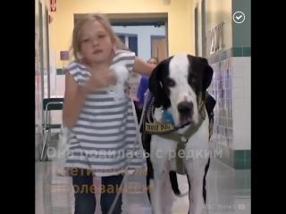 Пёс стал лучшим другом