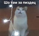 Константин Мышь фотография #32