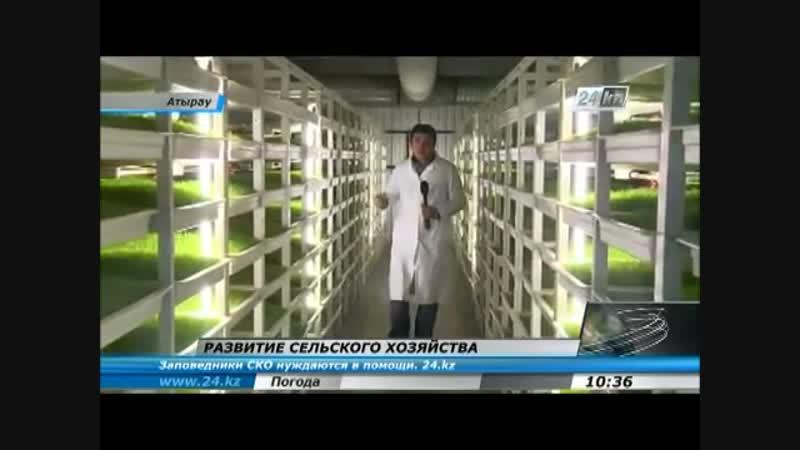 Гидропонная ферма по выращиванию ячменя