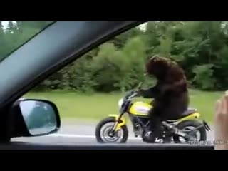 Прикол_ медведь на мотоцикле едет по трассе