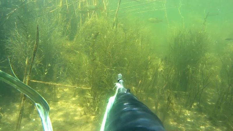 Подводная Охота Весной Прозрак 100%