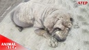 Mangy Dog Undergoes Amazing Transformation Looks so Different Now