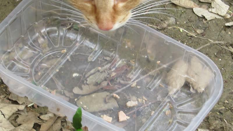 Katzenvideo nicht lustig Fressen im Freien Wildnis 002 CANON PowerShotSX50 002