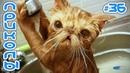 ЛУЧШИЕ ПРИКОЛЫ С ЖИВОТНЫМИ 2019 Смешные Коты и Кошки Приколы с котами до слёз 36