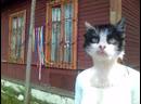 Света - Кошка