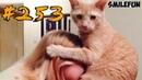 КОШКИ 2019 Смешные коты 2019 Приколы с кошками и котиками Funny Cats Выпуск 253