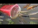 Increíble Chica Inteligente Construir Trampa Para Peces Usando Botella Protector De Ventilador
