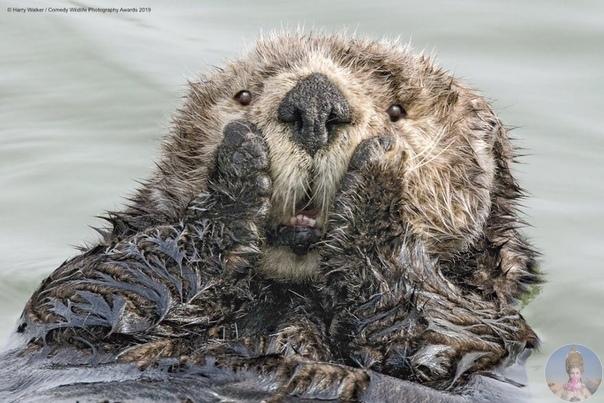 Забавные снимки дикой природы