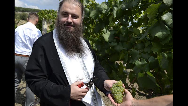 освящение винограда на винзаводе Золотая Балка