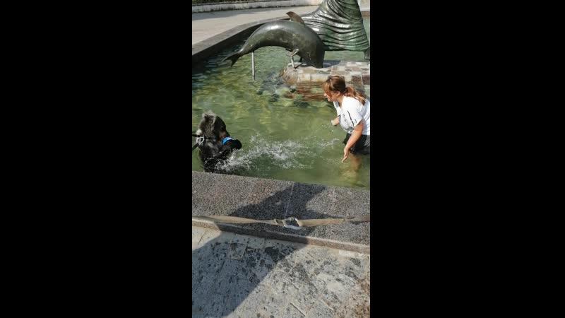 Игра с медвежатами в фонтане