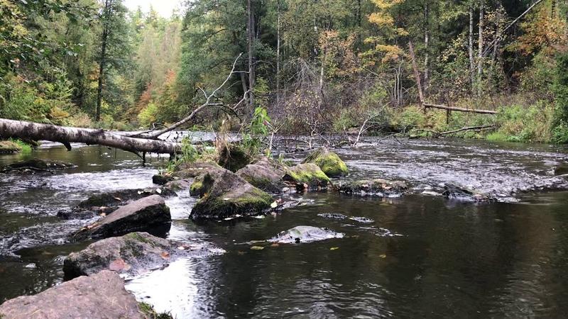 Roshchinka river Линдуловская роща