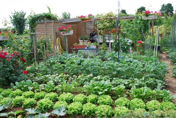 Растительные яды. Это различные настои и отвары из трав и растений, либо содержащих ядовитые вещества, либо обладающих резким запахом. Нельзя сказать, что они совершенно безвредны. Яды они и