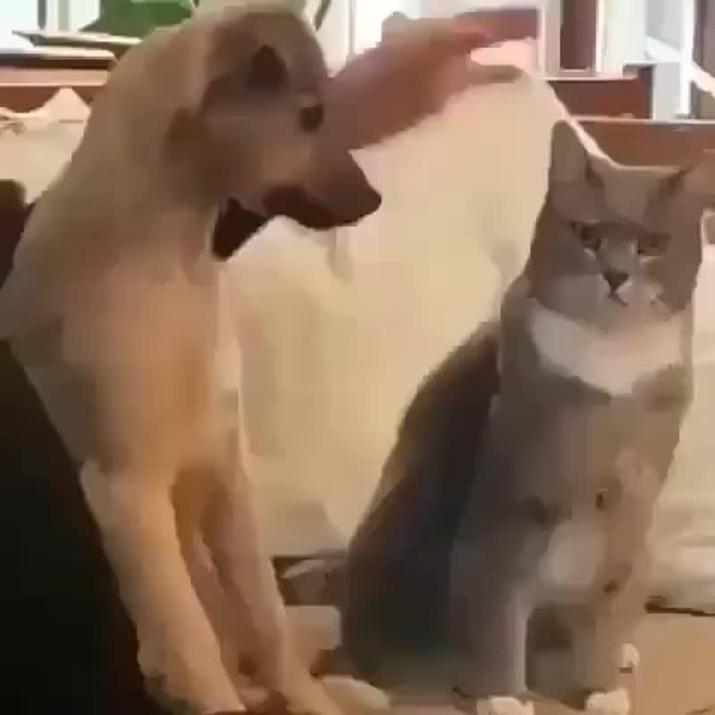 собака повторяет за человек и гладит кошку