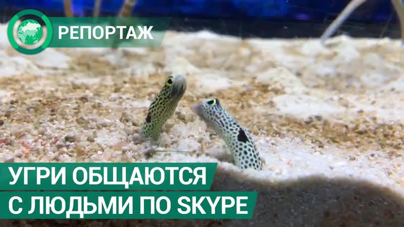 Угри из токийского океанариума общаются с людьми по Skype ФАН ТВ