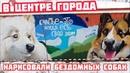 Нарисовали в центре города бездомных собак Биля и Тузик