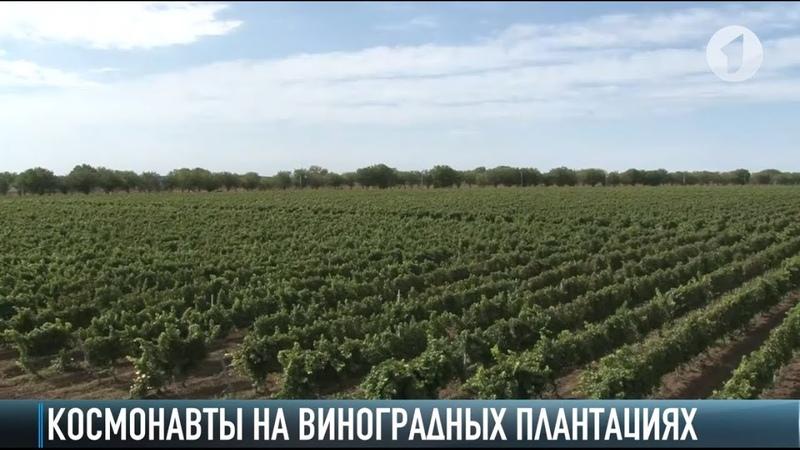 «Космическая экскурсия» по виноградным плантациям