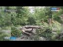 В Заводском районе Саратова упавшие деревья затрудняют проезд