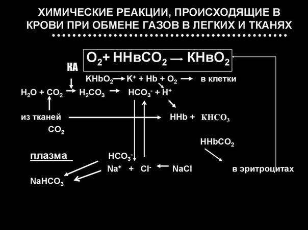 Диета По Химическим Реакциям Протекающих В Организме. Химическая диета Усама Хамдий