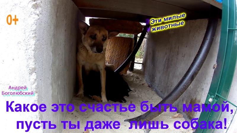 0 *** Собачье материнство Из жизни домашних