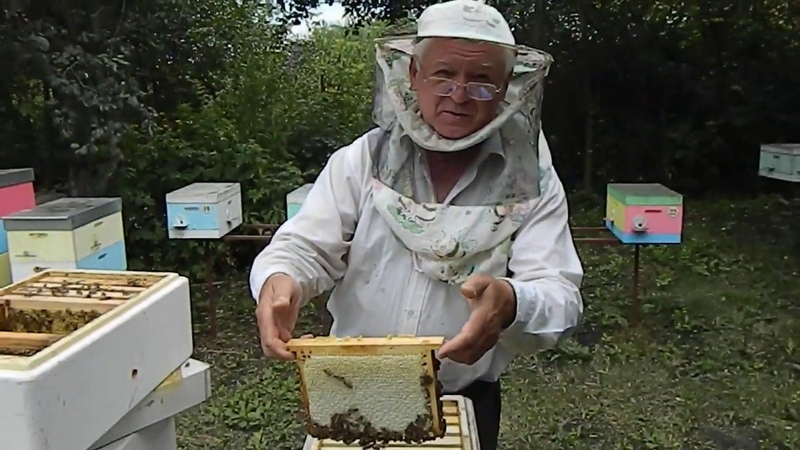 Пчеловодство Работа с Нуклексом на пасеке Измайлова