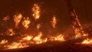 И весь мир падёт перед диким огнём