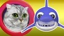 Baby Shark CAT on a Submarine | Sing and Dance! | Animal Songs | Songs for Children | Boochi Boom TV