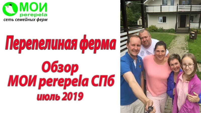 Перепелиная ферма Обзор фермы МОИ перепела СПб Июль 2019
