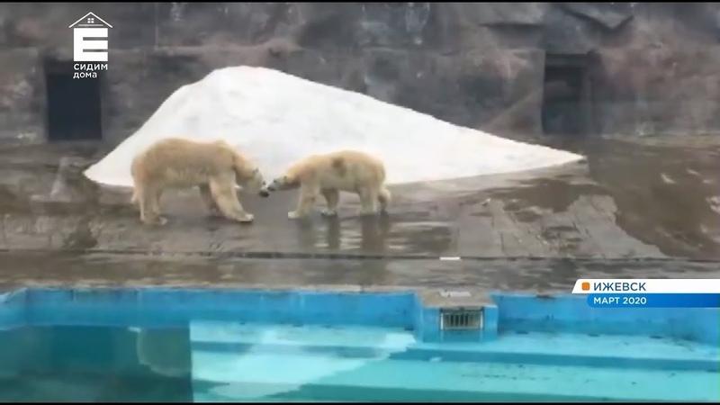 Директор красноярского зоопарка прокомментировал смерть медведицы Авроры