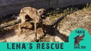 Fearful, aggresive dog close to dying transforms to sweet and loving - Lenas story - Takis shelter