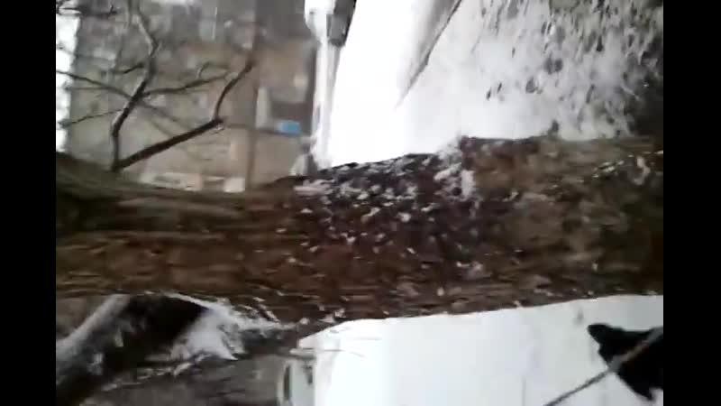 собака на дереве 2