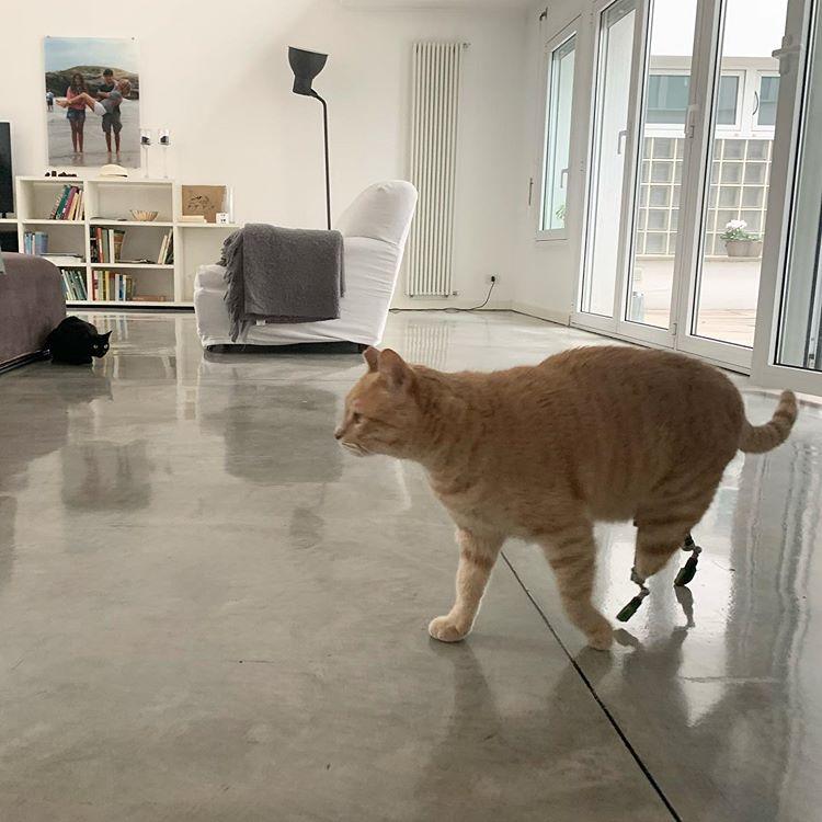 feiJ 1g0brs - Вито, Витуццо – первый в мире кот с протезами лапок