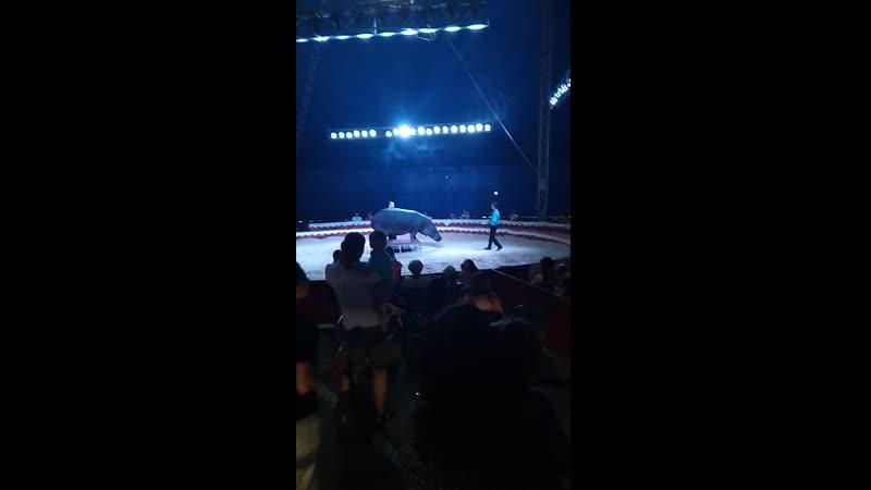 цирк 2019 літо