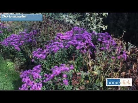 4 Fall Blooming Perennials