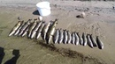 РыбалкаЛетоЩукаХариусСпинингОтдых Рыбалка на реке, готовим пойманую рыбу.