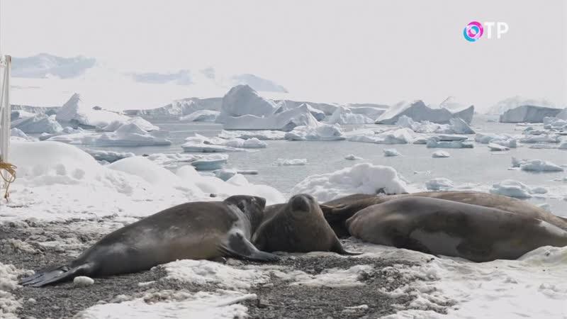 Ученые предупредили об угрозе раскола огромной площади изо льда в Антарктиде