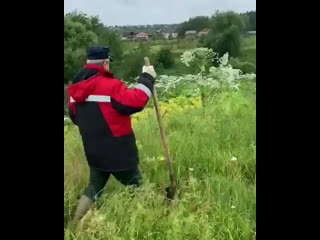 Депутат Госдумы от Ивановской области Юрий Смирнов предлагает вырубать борщевик лопатой.