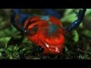 Яд. Достижение эволюции Poison, an evolutionary mystery 2015 - Эпизод 1