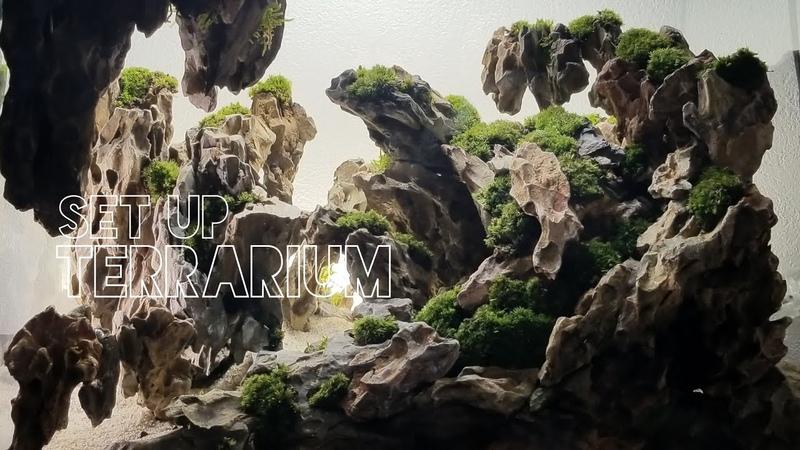 DragonStone set up hardscape Terrarium