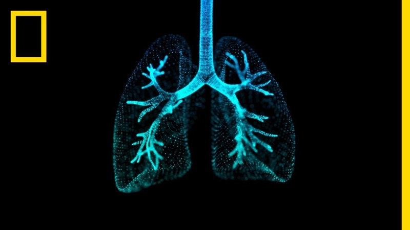 Lungs 101 National Geographic