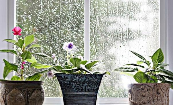 Комнатное растение пропадает: как цветок спасти