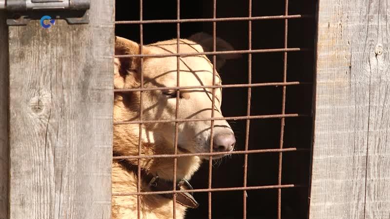 Петрозаводские приюты для животных продолжают настоящую борьбу за выживание