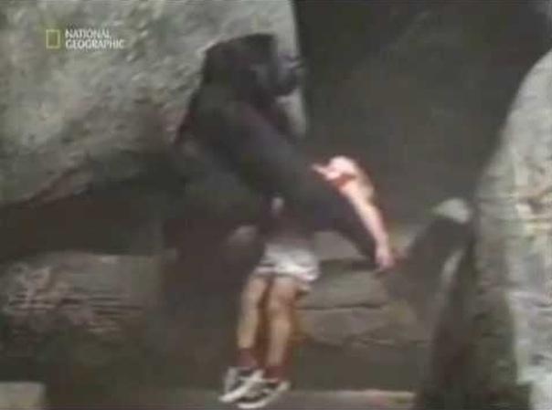Эта горилла смогла удивить весь мир!